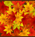 autumn falling leaves background template with red vector image