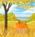 autumn landscape with yellow meadow tree pumpkin vector image