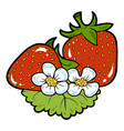 color image cartoon berry strawberry vector image vector image