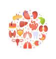 human iinternal organs round shape healthcare vector image