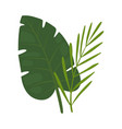 leaves palm trees beautiful green tropical vector image