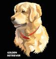 colorful golden retriever vector image