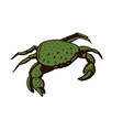 crab stylized drawing vector image vector image