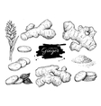 hand drawn Ginger set Root ginger pieces vector image vector image