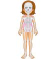 Skeletal system in human girl vector image vector image