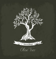 ancient greek olive oil tree in grove vector image vector image