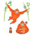 family orangutans vector image vector image