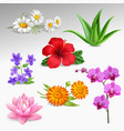 flowers plants realistic icons collection vector image vector image