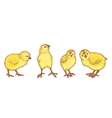 Hand drawn colored sketch of 4 easter chicks
