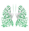human lungs respiratory system healthy lungs vector image