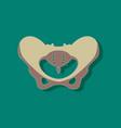 pelvic bones paper sticker on stylish background vector image