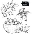 set of hand drawn organic jojoba branch and nuts vector image