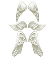 Angel wings on white vector image
