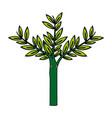 branch leaves flora decoraton laurel plant vector image vector image