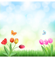 grass tulips background vector image vector image