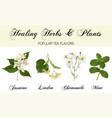 healing plants set vector image