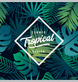 tropical banner design vector image vector image