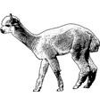 alpaca sketch vector image vector image