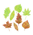 watercolor autumn leaves set vector image
