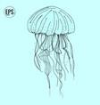 hand drawn jellyfish sea marine animal vector image