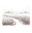 cornfield grain stalk sketch vector image