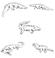 Crocodiles Sketch pencil Drawing by hand vector image vector image