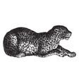 leopard vintage vector image vector image