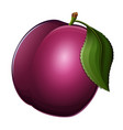 plum icon isolated on white background vector image vector image