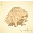 Sketch cute echidna in vintage style vector image vector image