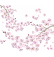Vintage Cherry flowers background vector image