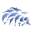 Graphic dolphins collection vector image vector image