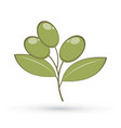 olive graphic vector image vector image