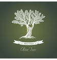 Olive tree logo with branches vector image vector image