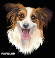 papillon in color vector image vector image