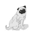 pug sitting color vector image vector image