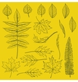 set autumn leaves drawn in thin lines vector image