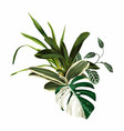 tropical palm leaves jungle leaf orchid plant vector image vector image