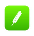 dried wheat ear icon digital green vector image vector image