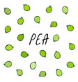 peeled green pea pod healthy bio vegetarian food vector image