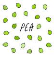 peeled green pea pod healthy bio vegetarian food vector image
