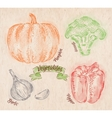 Vegetables pepper pumpkin garlic broccoli country vector image vector image