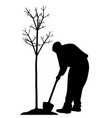 young man planting a tree vector image vector image