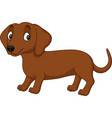 cartoon dachshund dog isolated on white background vector image vector image