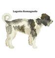 colored decorative standing portrait lagotto vector image vector image