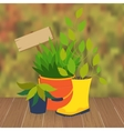 Garden flower bed vector image
