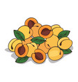 isolate ripe apricot fruit vector image vector image