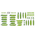peeled green pea pod big set healthy bio vector image vector image