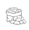 potato tubers outline hand drawn monochrome vector image