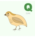 Alphabet letter Q quail children vector image vector image