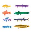 aquarium tropical fish set vector image